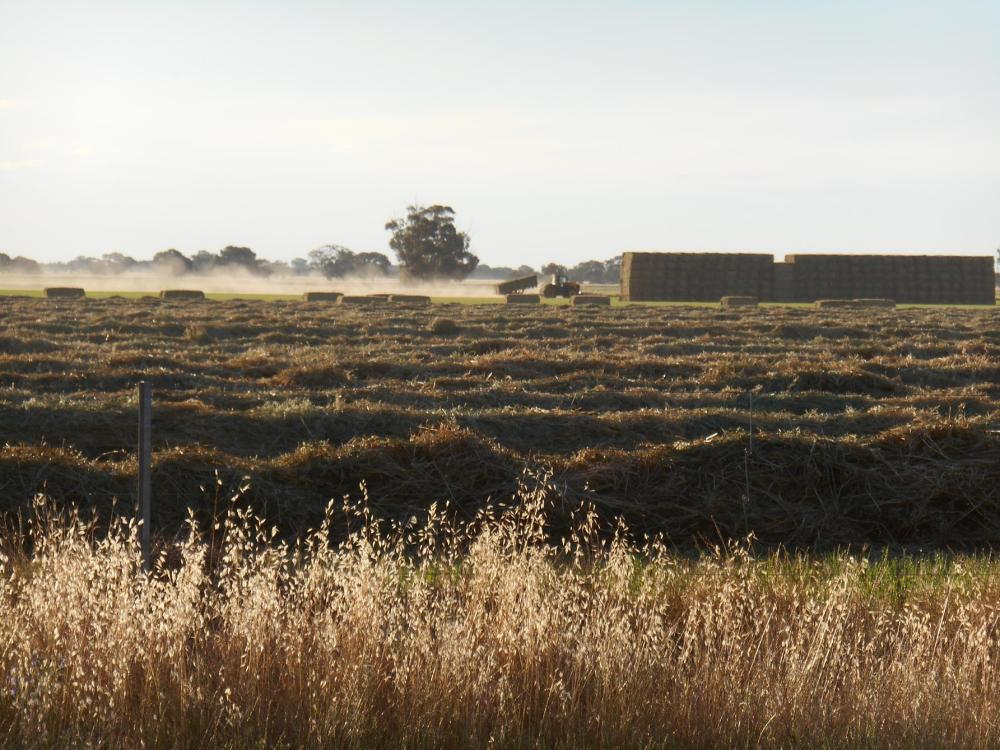 Baling oaten hay at Womboota