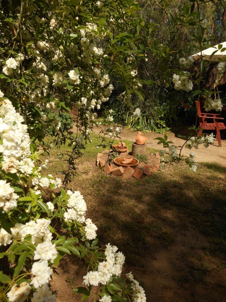 The rose arbor in our cellar door garden